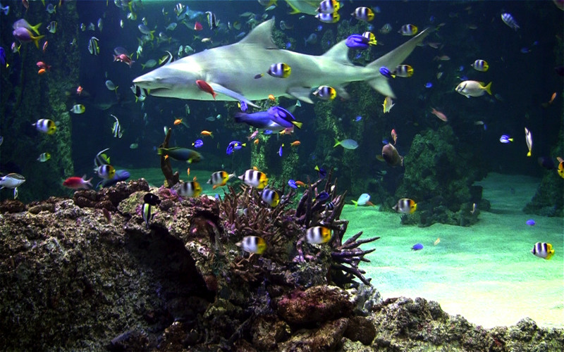 Live Aquarium Screensaver Download 7 800x500