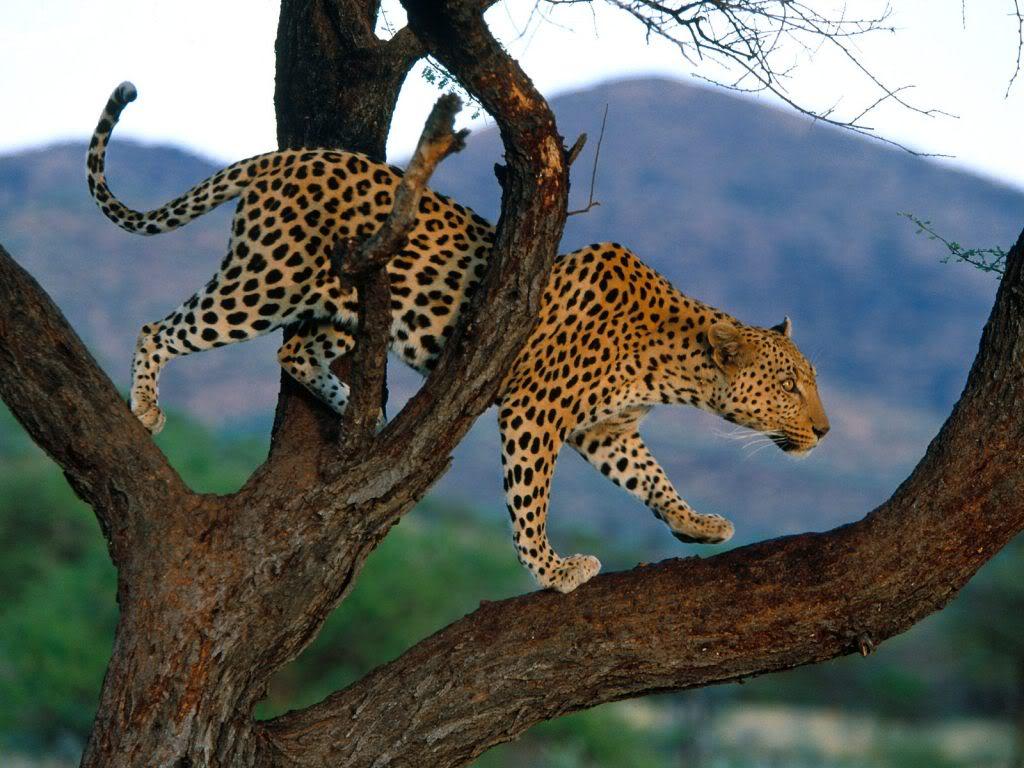 Wallpapers Desktop Wallpapers Amazing Wildlife Wallpapers 1024x768