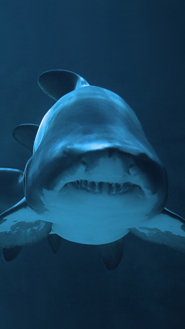 Shark Wallpaper 640x1136