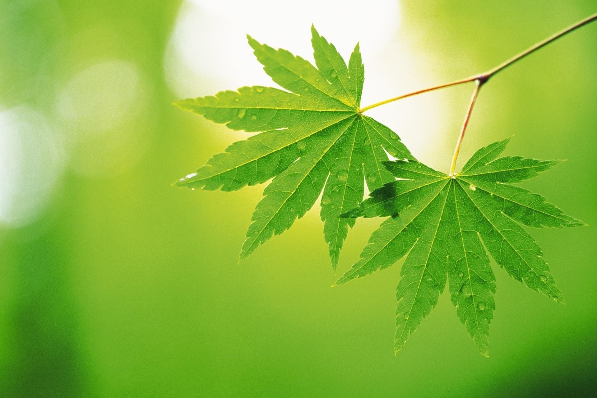 Green Leaf Wallpaper HD  WallpaperSafari