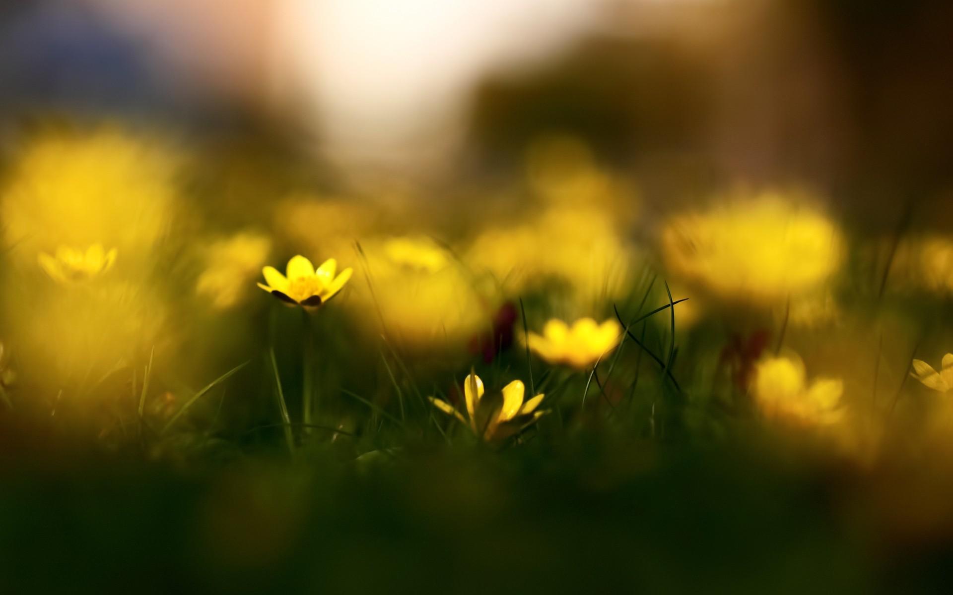 Macro Photography wallpapers Yellow Flowers Macro Photography stock 1920x1200