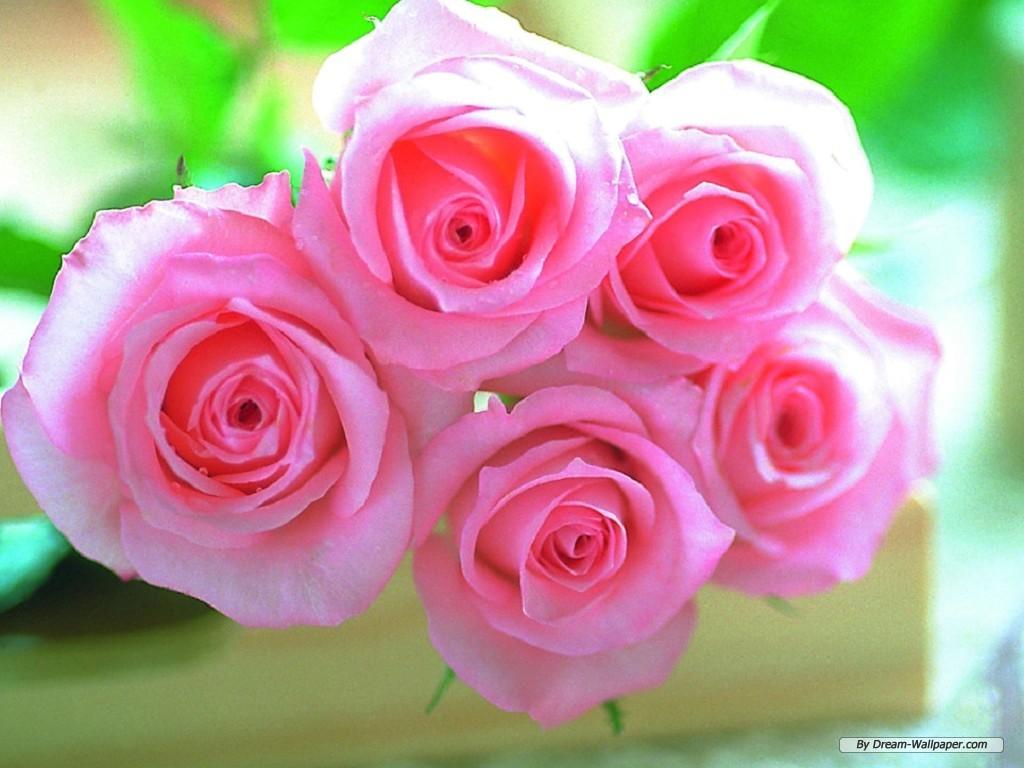 httpphunkciominfoplayersrufree valentine rose screensaverhtml 1024x768
