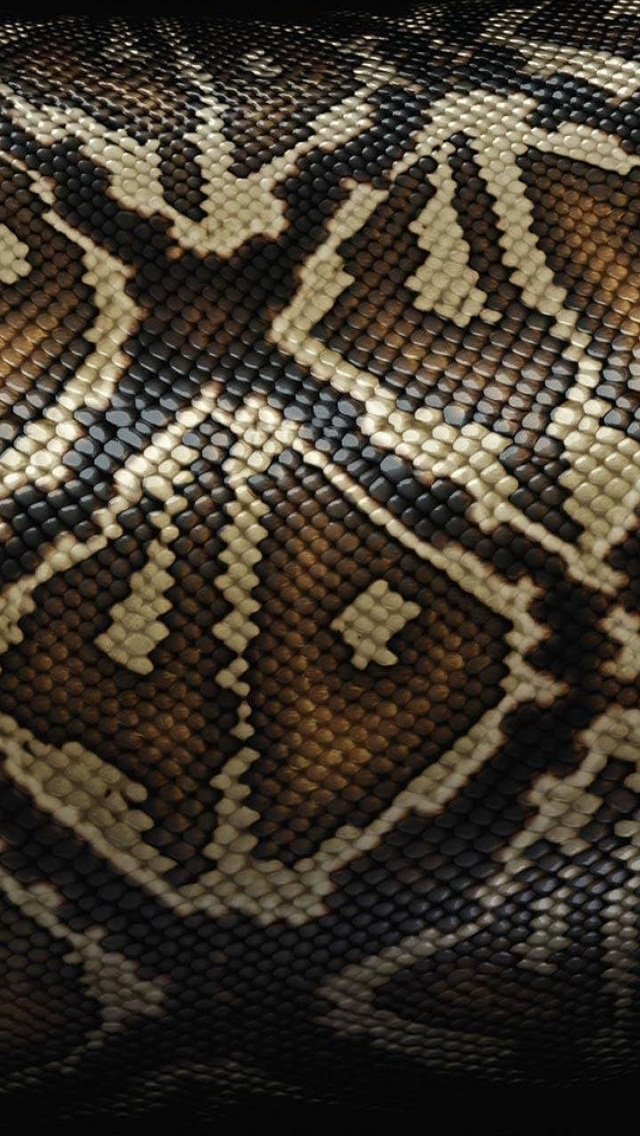 Black Snake Skin Wallpaper - WallpaperSafari | 640 x 1136 jpeg 275kB