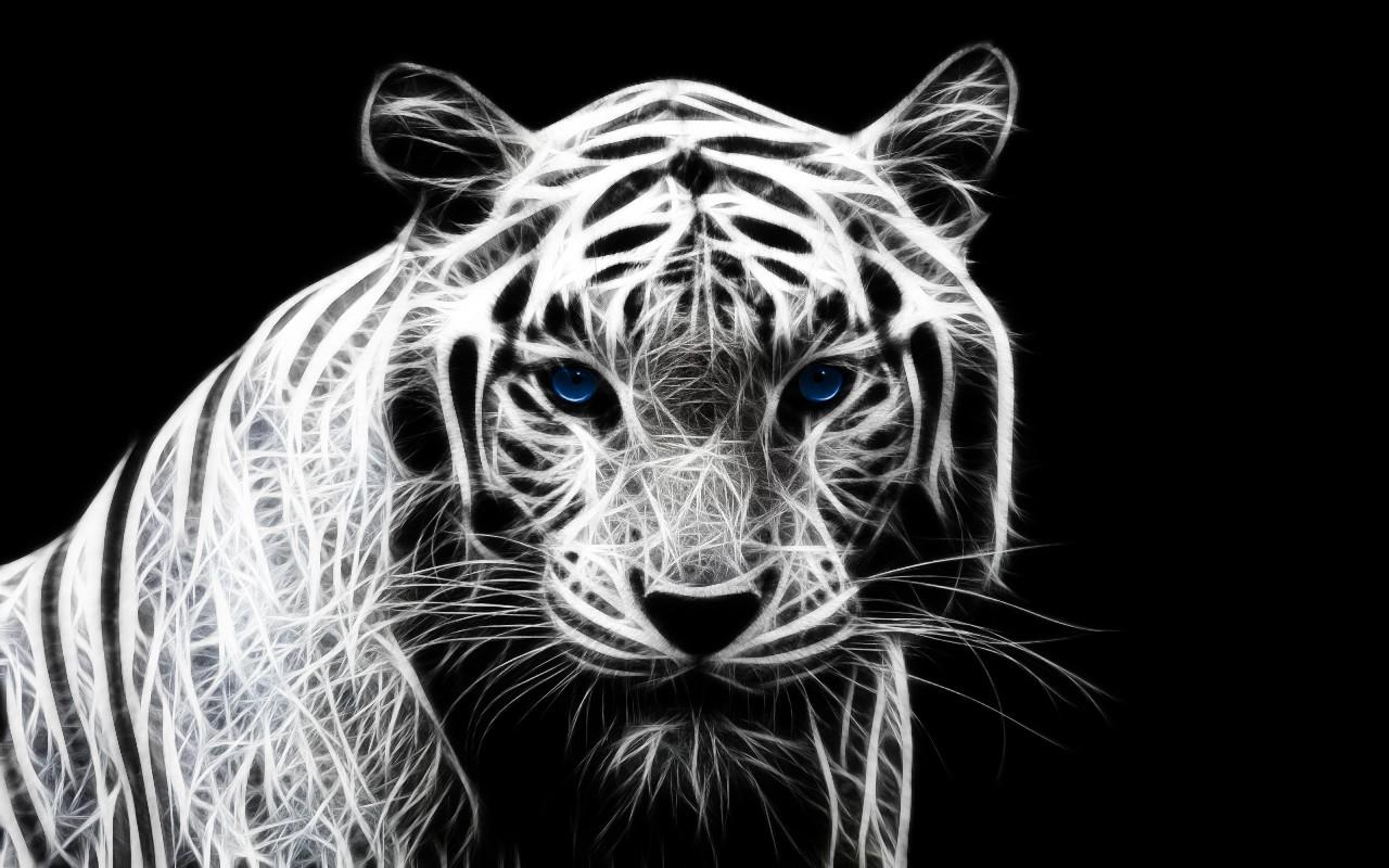 HD White Tiger Wallpaper HD Wallpaper 1280x800