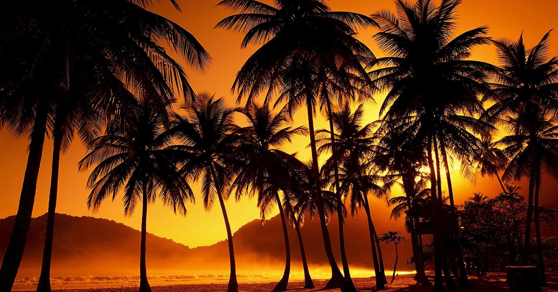 Palm Tree Desktop Wallpaper   HD Wallpapers Backgrounds of Your Choice 1920x1004