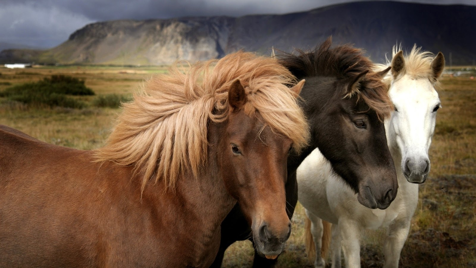 Beautiful Wallpapers wild horses wallpapers 1600x900