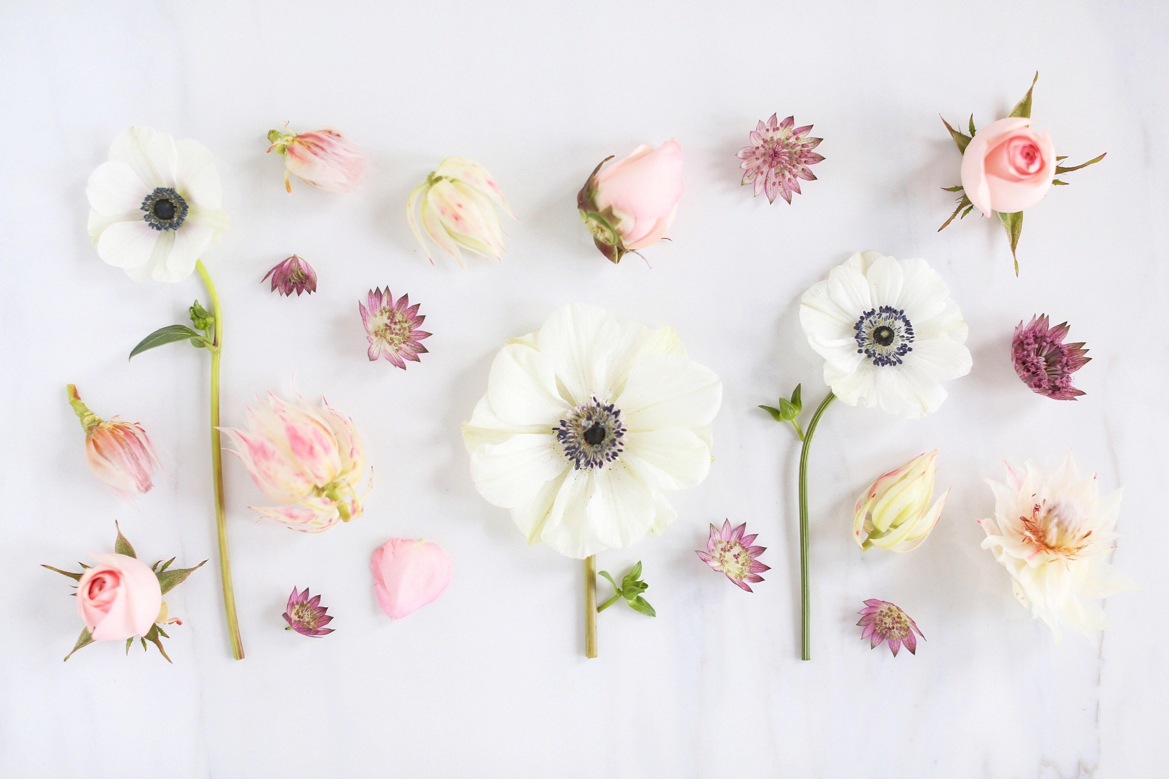 Free Download Floral Desktop Wallpaper 30 Background Pictures