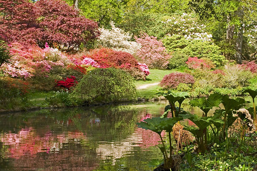 beautiful spring scenes image search results 500x333