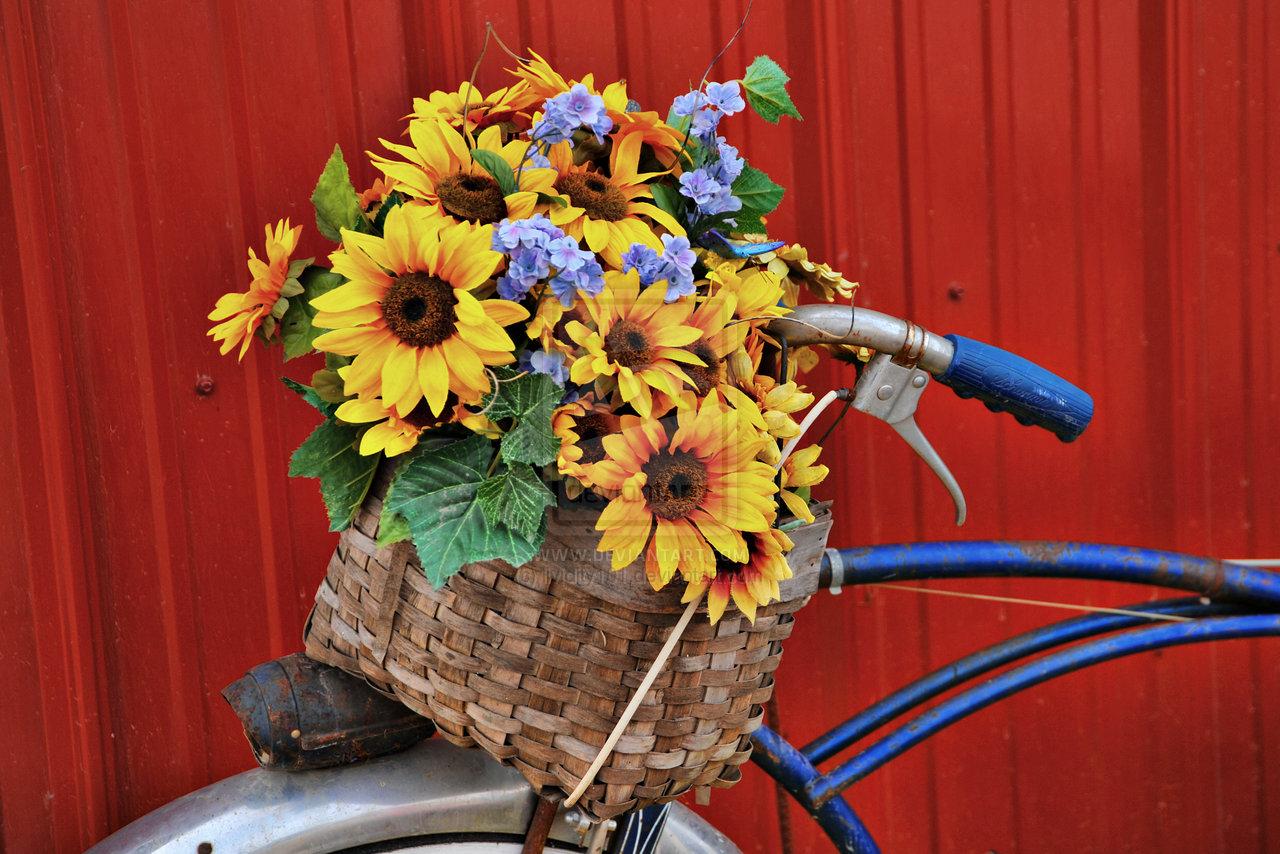 flower basket by lividity101 photography still life cut flower plant 1280x854