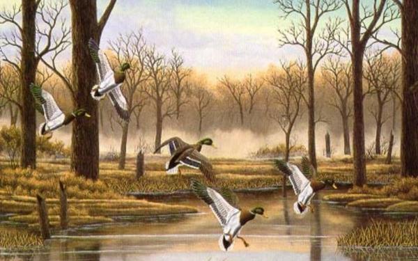 Ducks Unlimited Dog Wallpaper Animals Hd 600x375