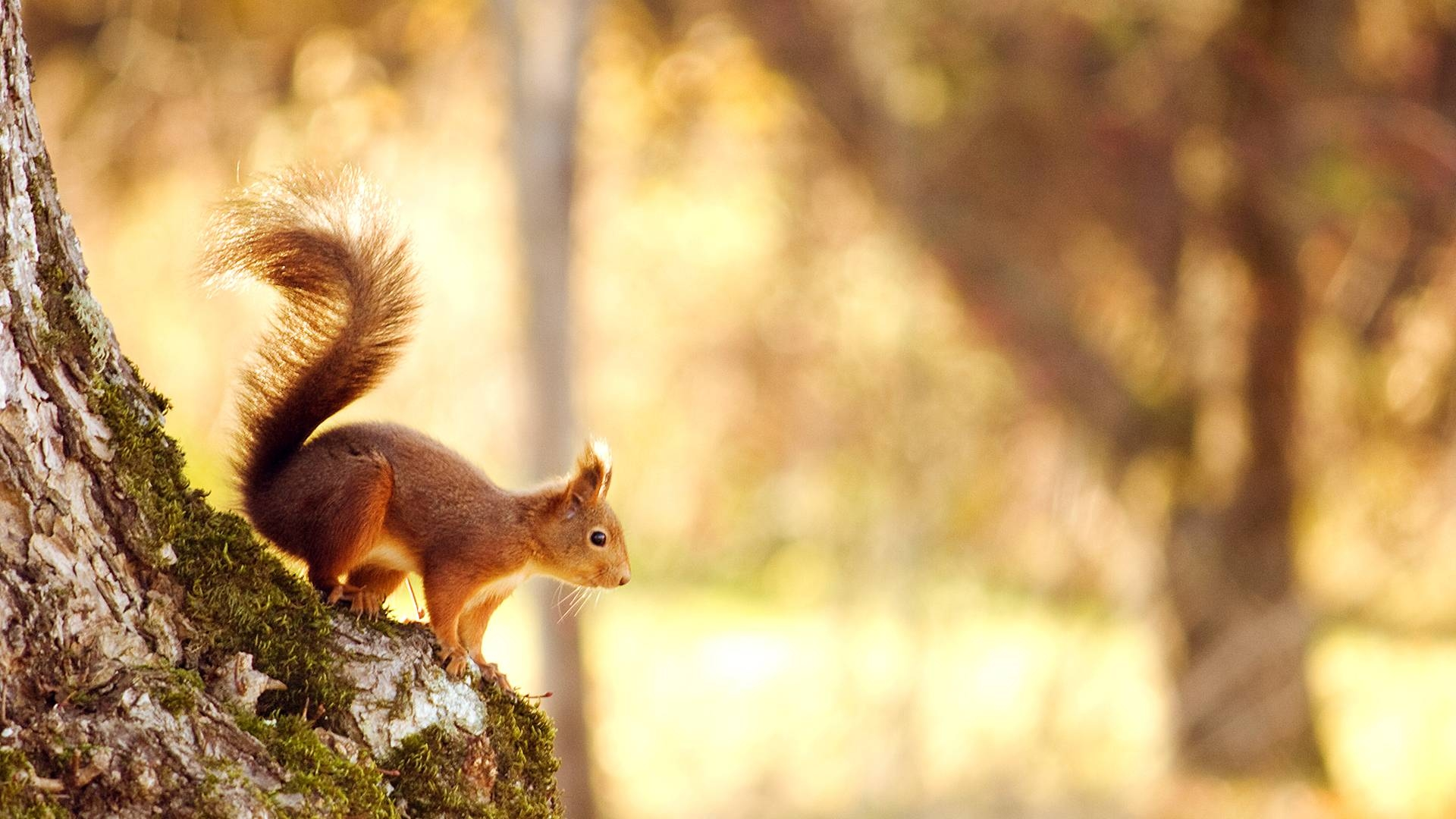 Animals in Spring Desktop Wallpaper - WallpaperSafari