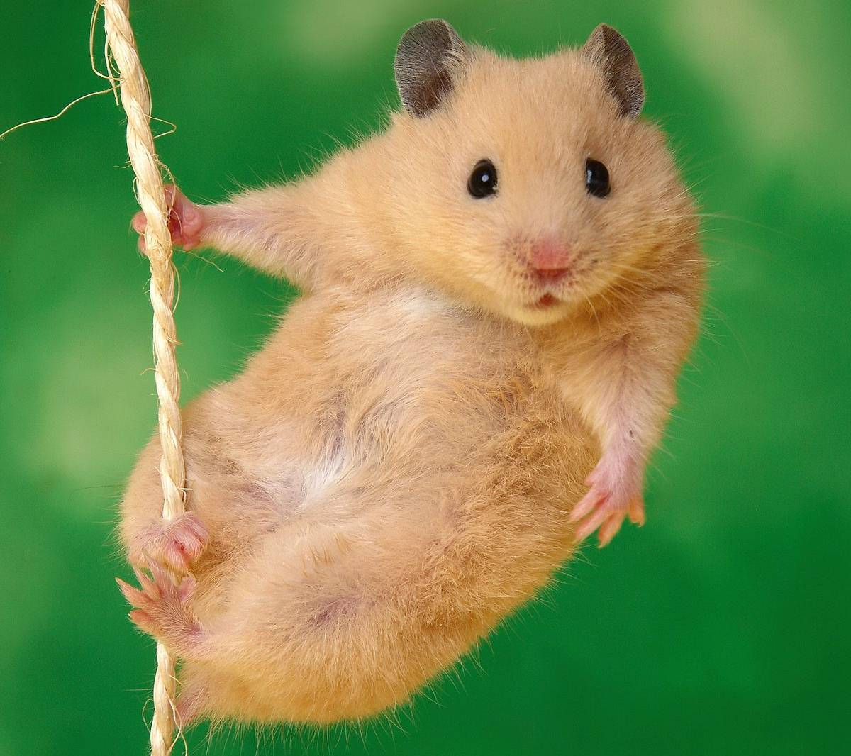Hamster Background Images HD HD Wallpapers 1200x1066