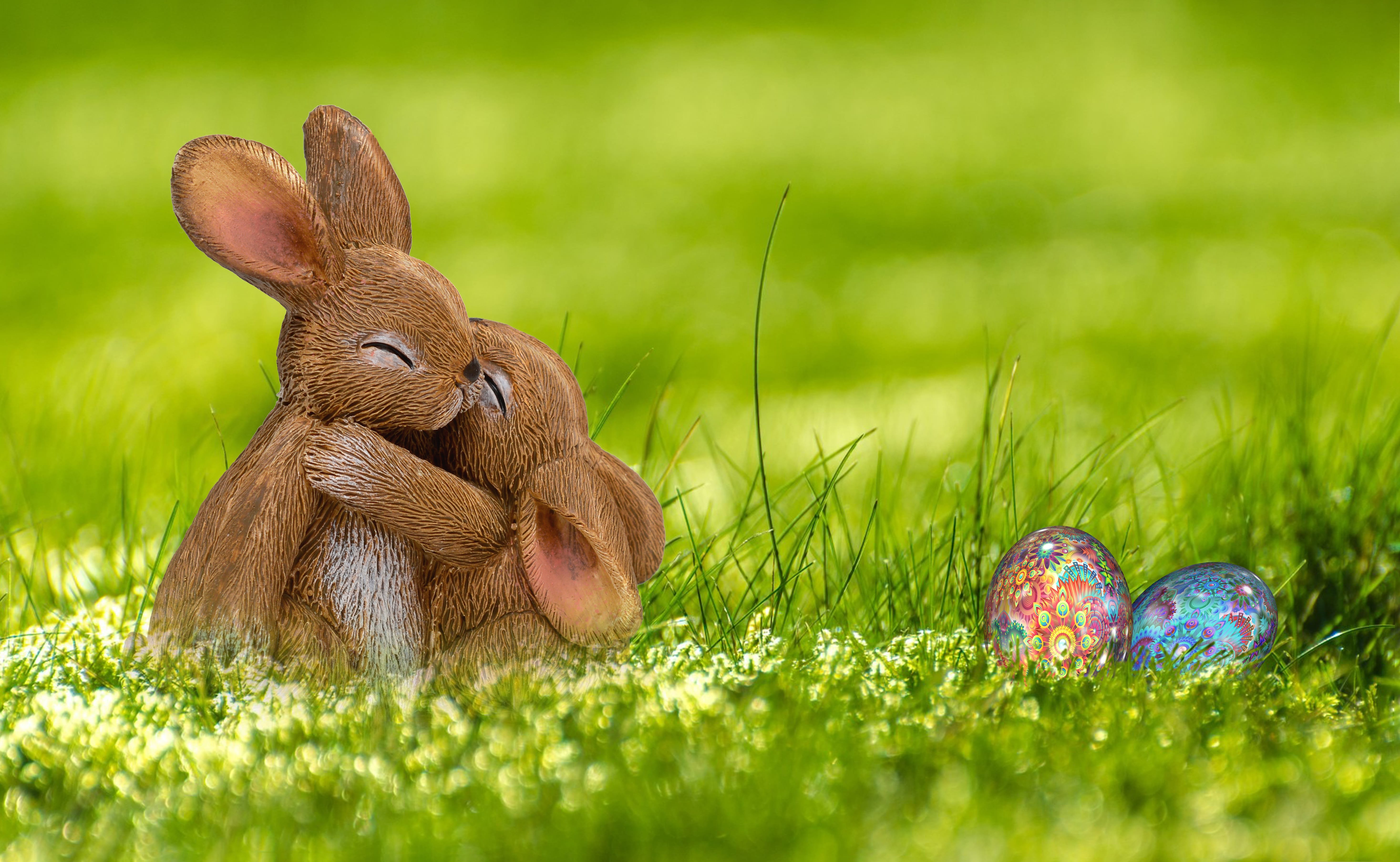 Easter Easter Bunny Hare Spring 3657 Wallpapers and Stock 5872x3618