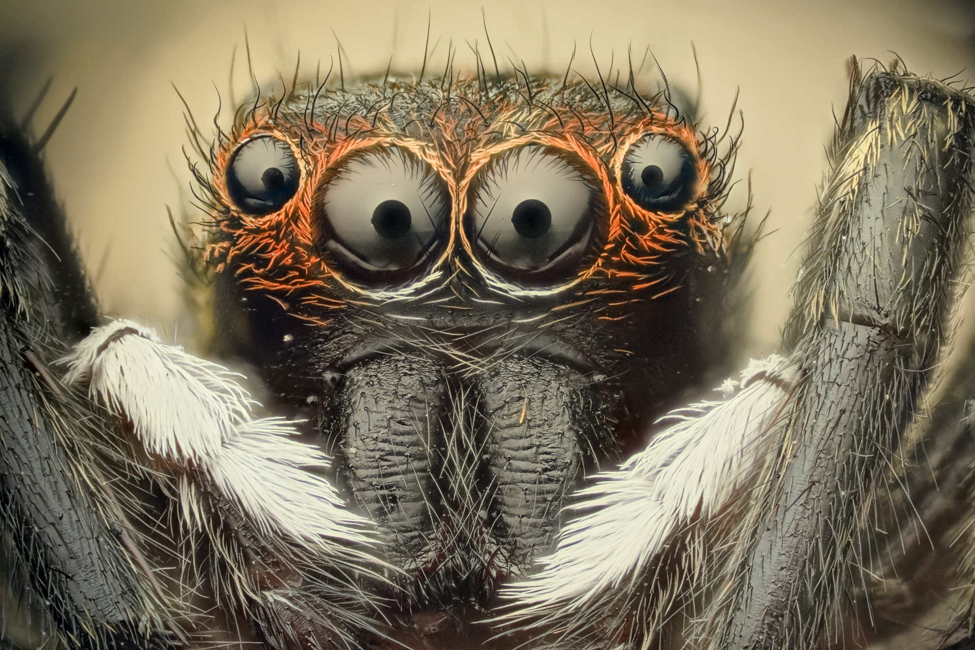 Spiders Wallpaper 1920x1280 Spiders 1920x1280