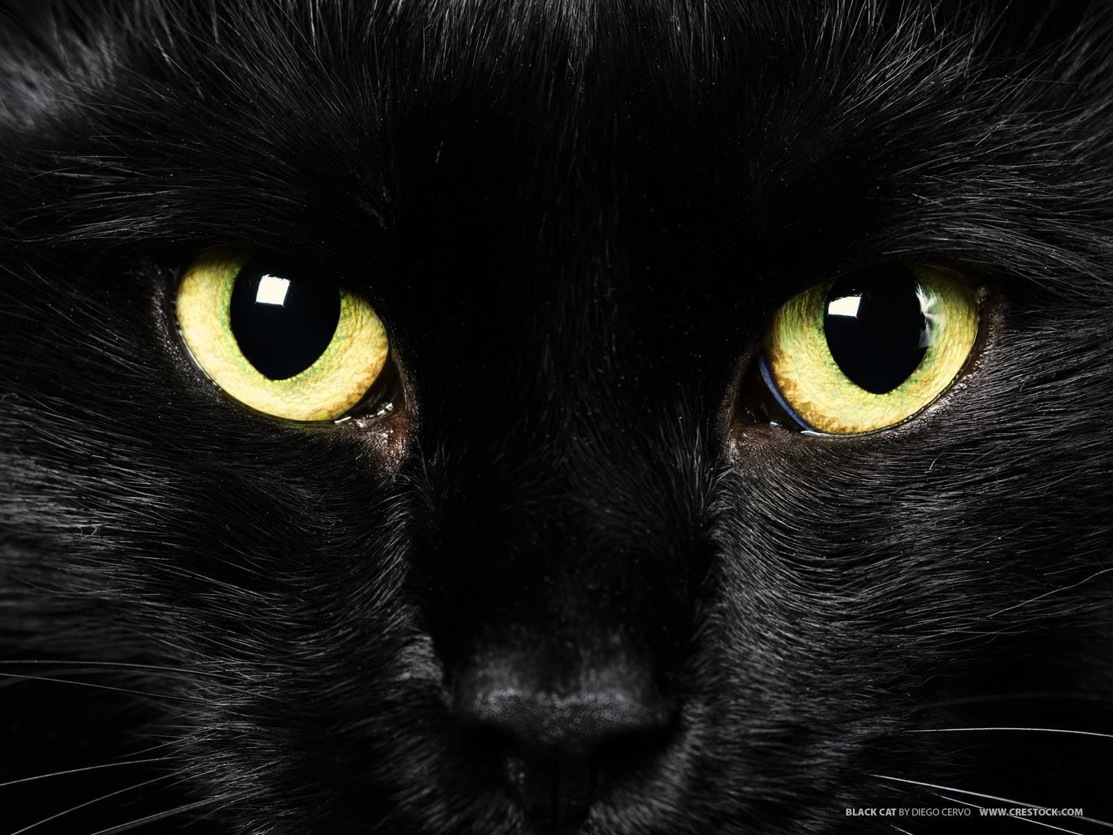 Black Cat Eyes Wallpaper on WallpaperSafari