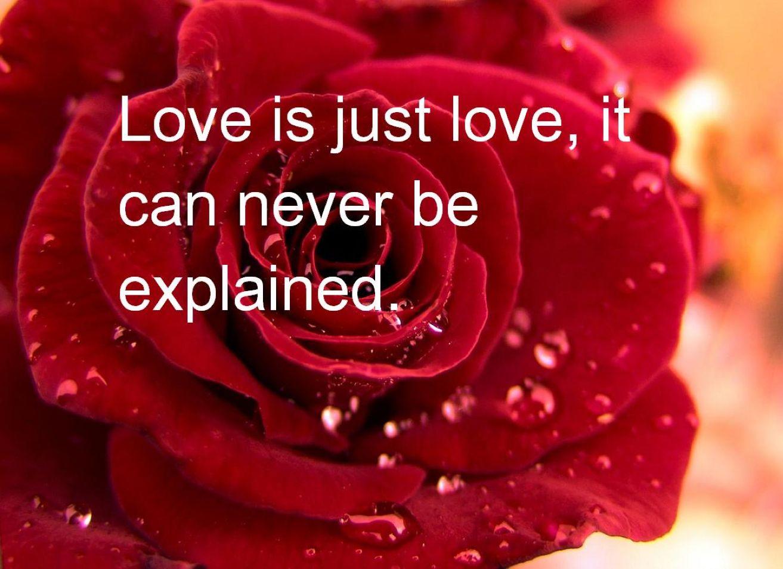 Cute Valentines Day Quotes Wallpaper Desktop HD Wallpaper 1313x954
