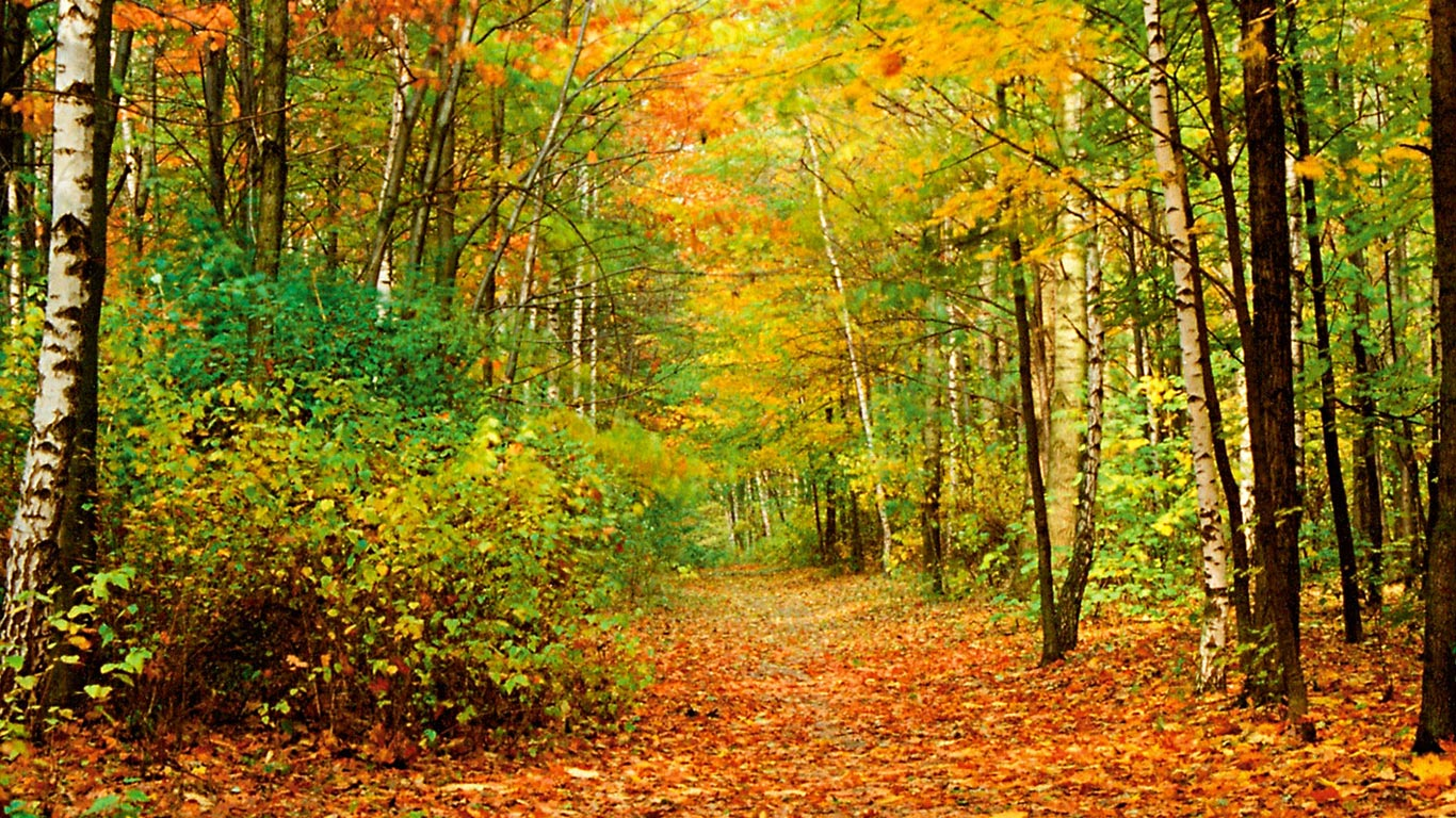Fall Foliage Wallpaper   Desktop Backgrounds 1366x768