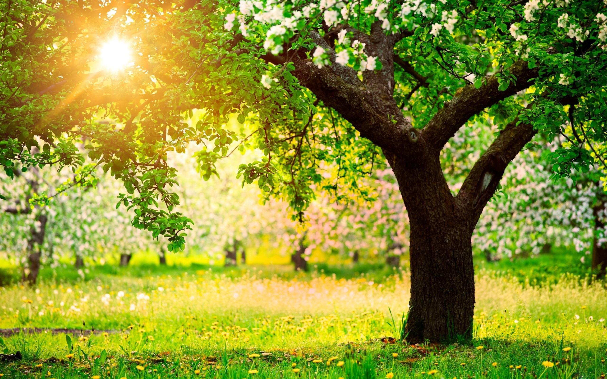 Beautiful Spring Nature Desktop Wallpaper - WallpaperSafari