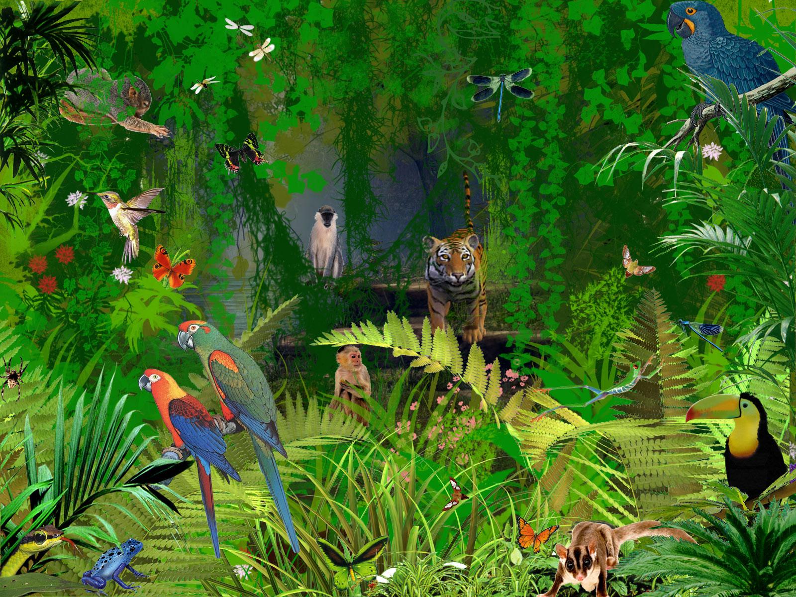 Jungle Wall Mural Jungle Animal Wallpaper Wallpapersafari