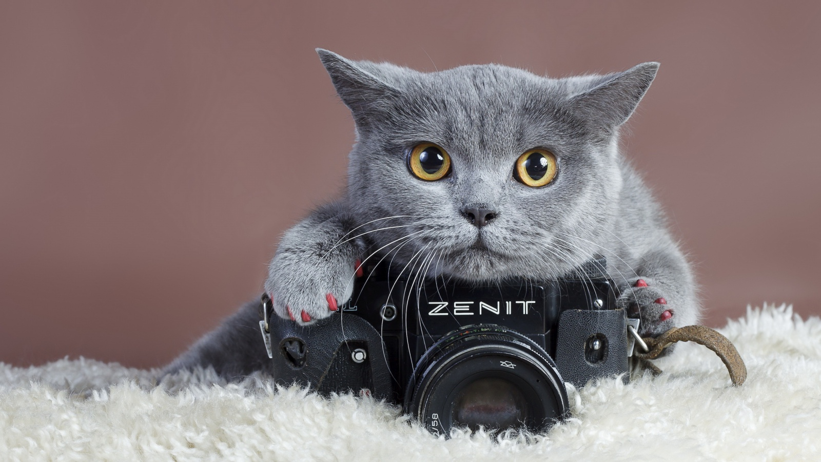 Description download Cute gray cat with camera wallpaper desktop 1600x900