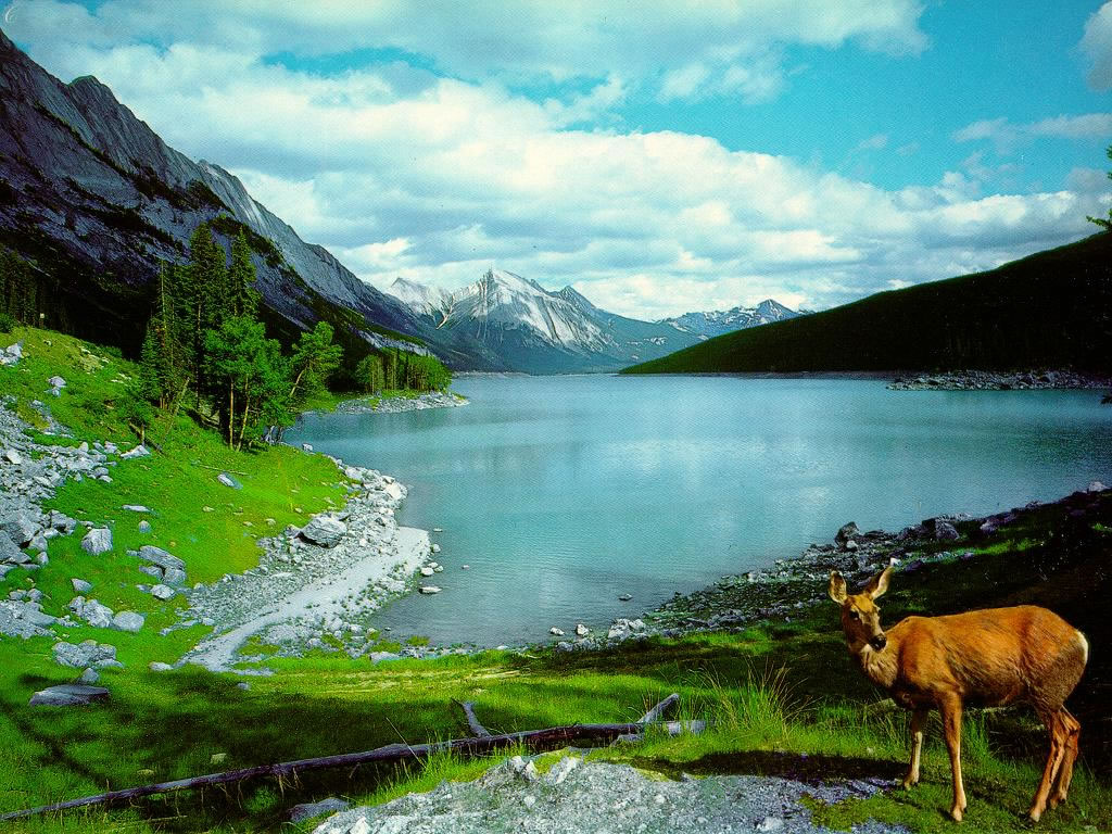 Download High Resolutions Natural Wallpapers Wallpaper Guru 1024x768