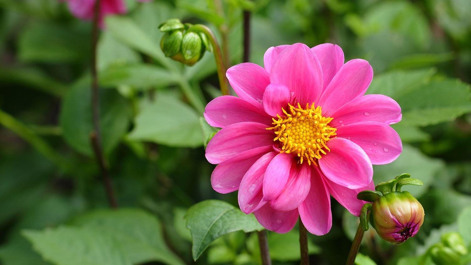 beautiful nature flower hd wallpaper flowers and natures on Rediff 1500x844