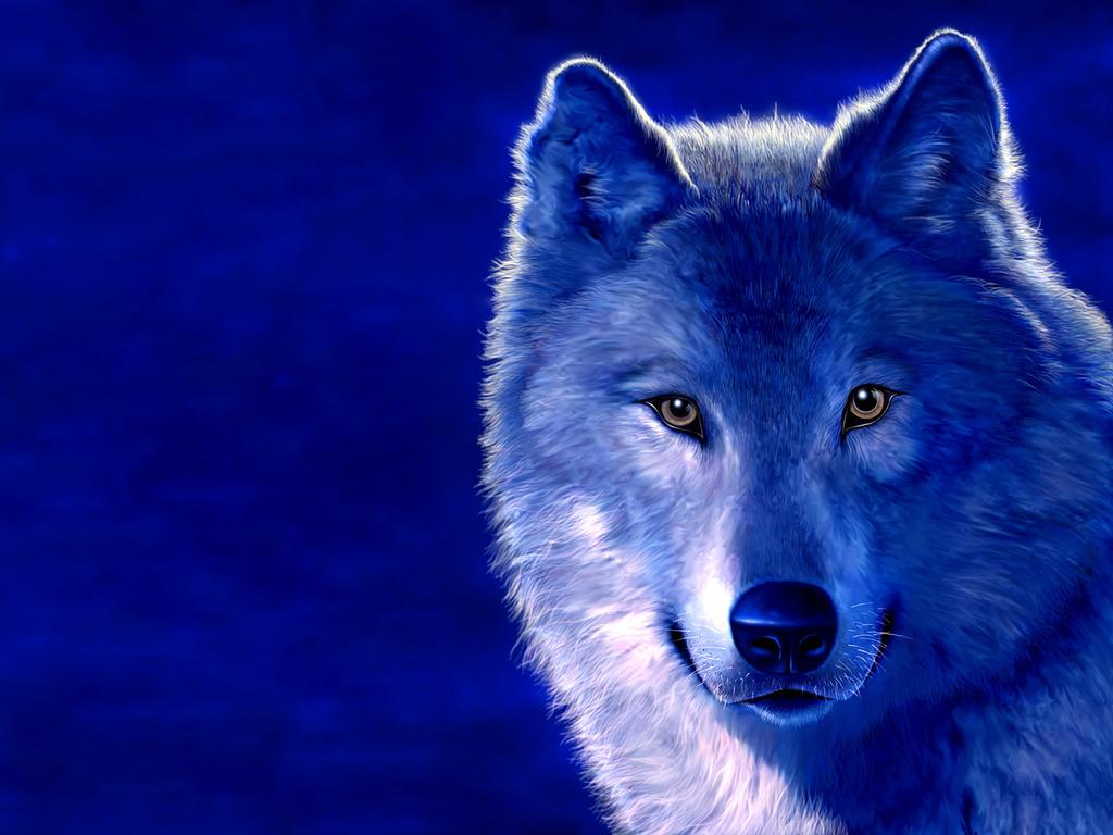Desktop Cool Wallpapers Wolf