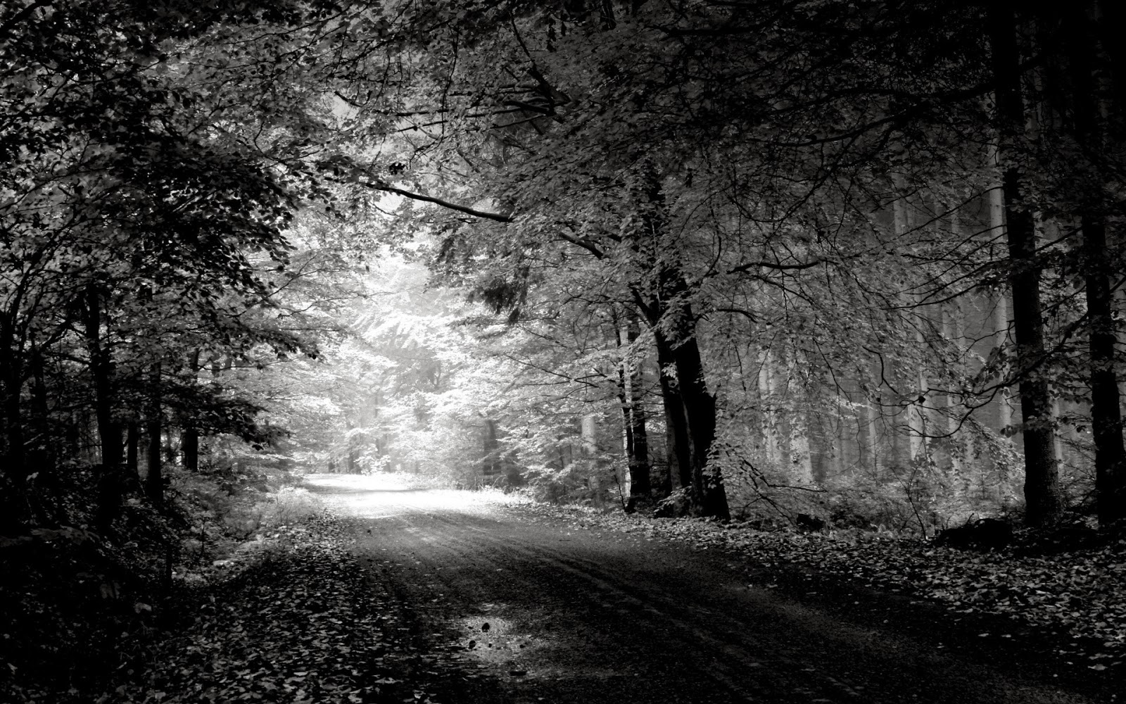 Best Wallpaper Photography Black And White black and white nature 1600x1000