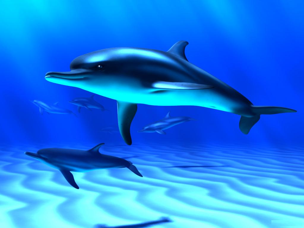 Dolphins Screensavers And Wallpaper
