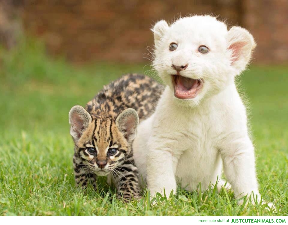 Cute Nature Animals Beautiful Nature Wallpaper cutie big cats cubs 960x751
