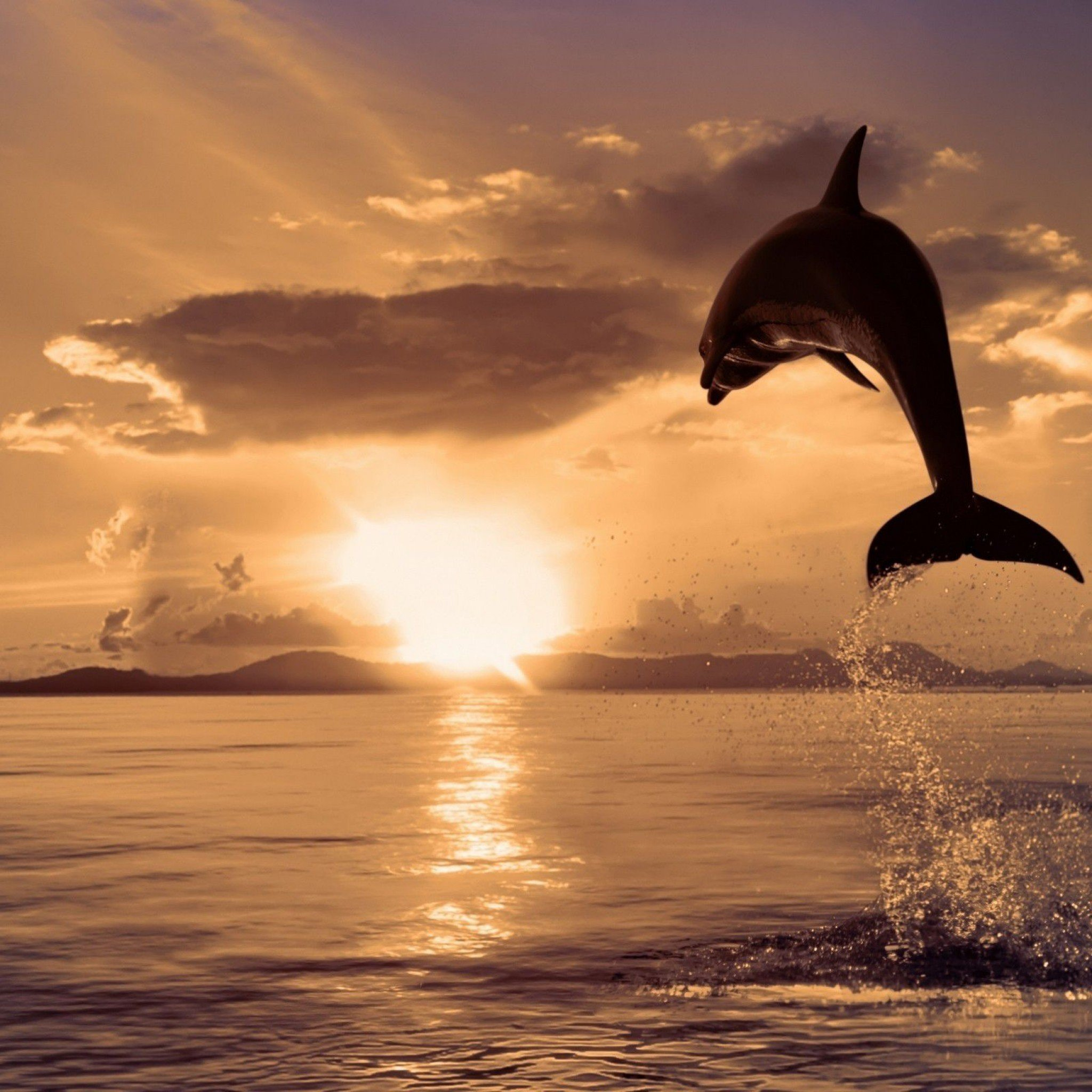 Dolphin Wallpaper HD 1080P