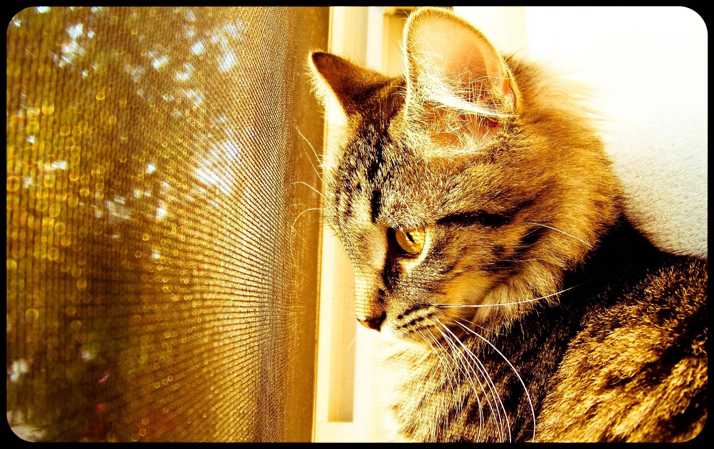 cat by the scren window wallpaper background 2331x1468