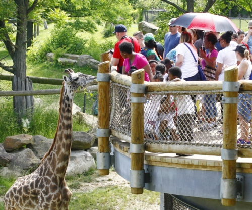 Akron and Cleveland zoos juggle needs of animals a fickle public and 500x416