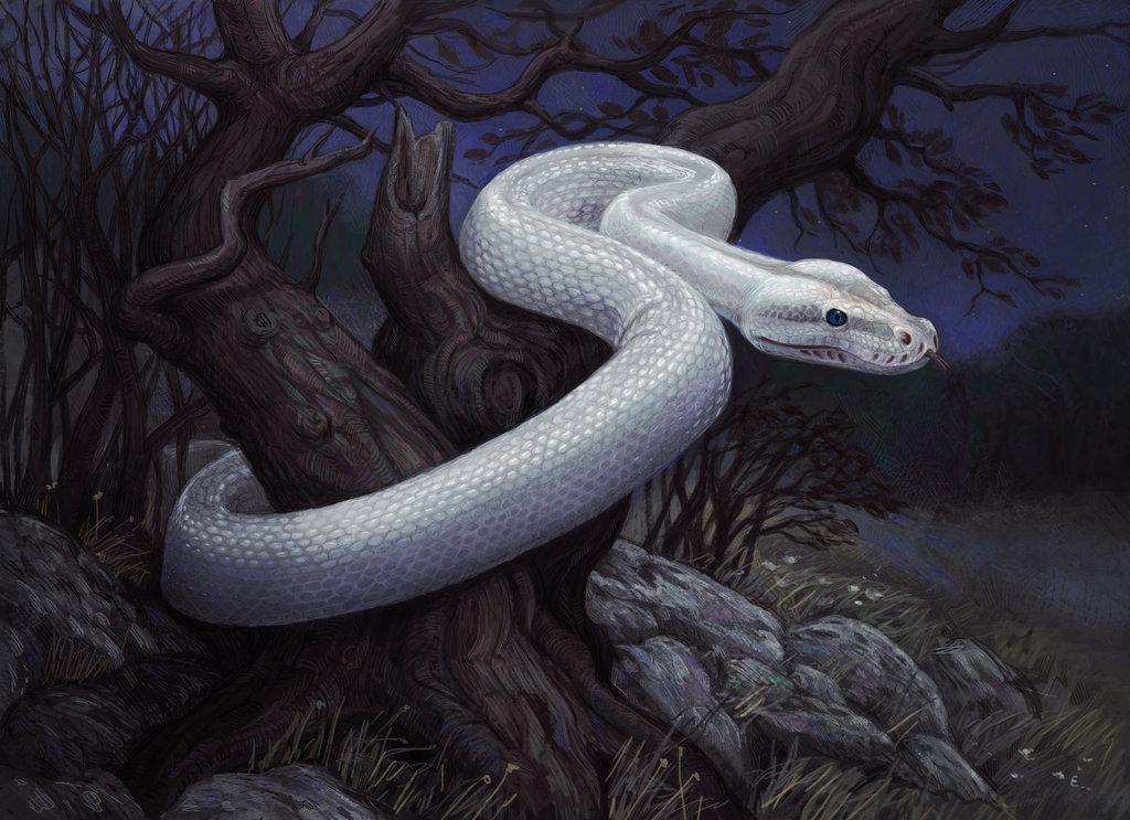 white snakeHQHD3DWhiteSnakeWallpapersBlack And White 3sir 1024x743