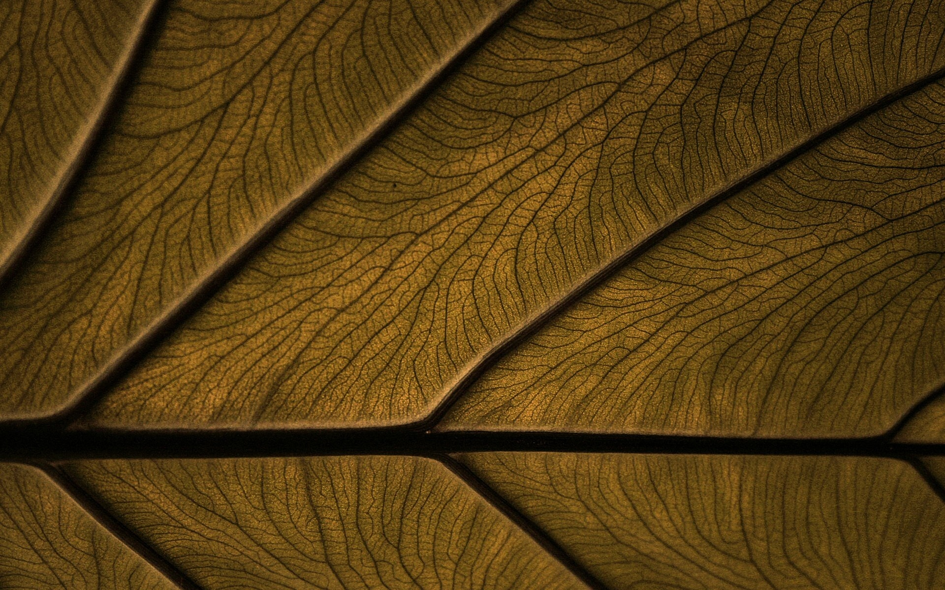 Download Brown Wallpaper Background Dekstop pictures in high 1920x1200
