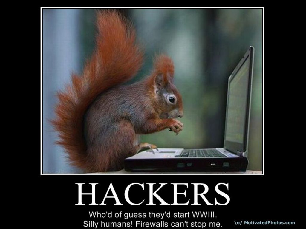 Squirrel wallpapers for desktop wallpapersafari - Funny squirrel backgrounds ...