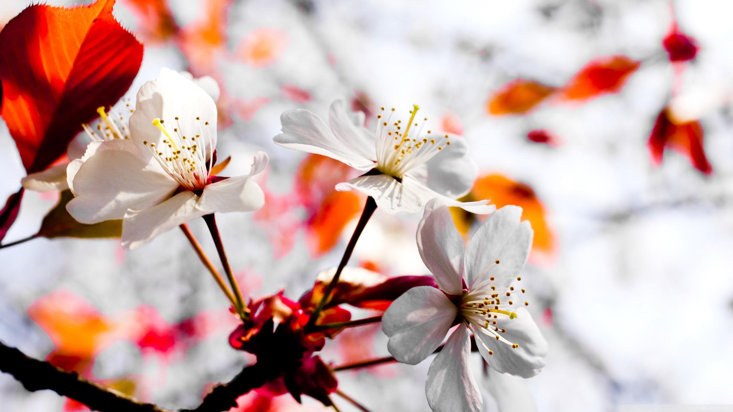 Spring Season Flowers 4K HD Desktop Wallpaper for 4K Ultra HD 2560x1440