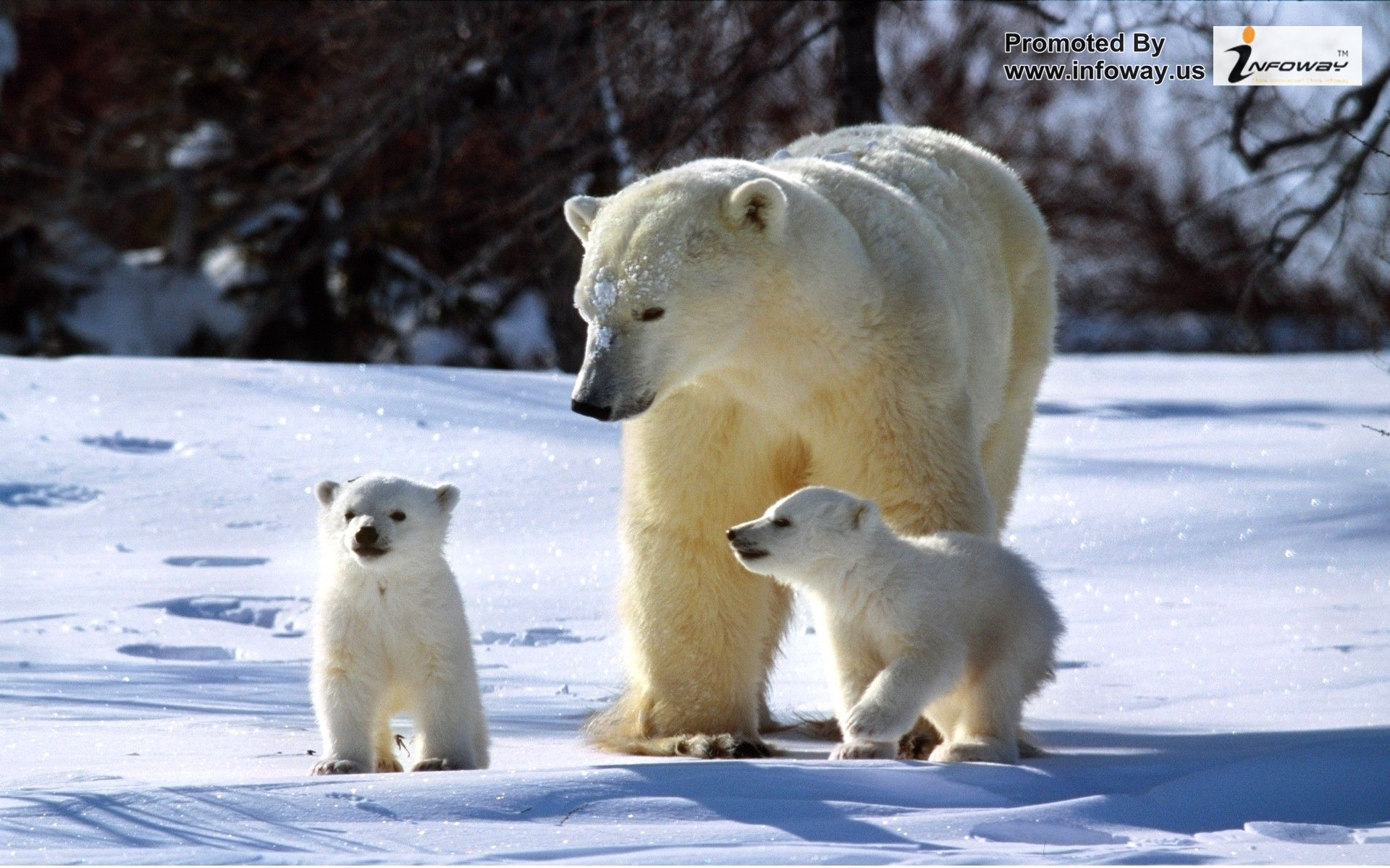 Cute animals pictures Cute winter pictures animals 1920x1200