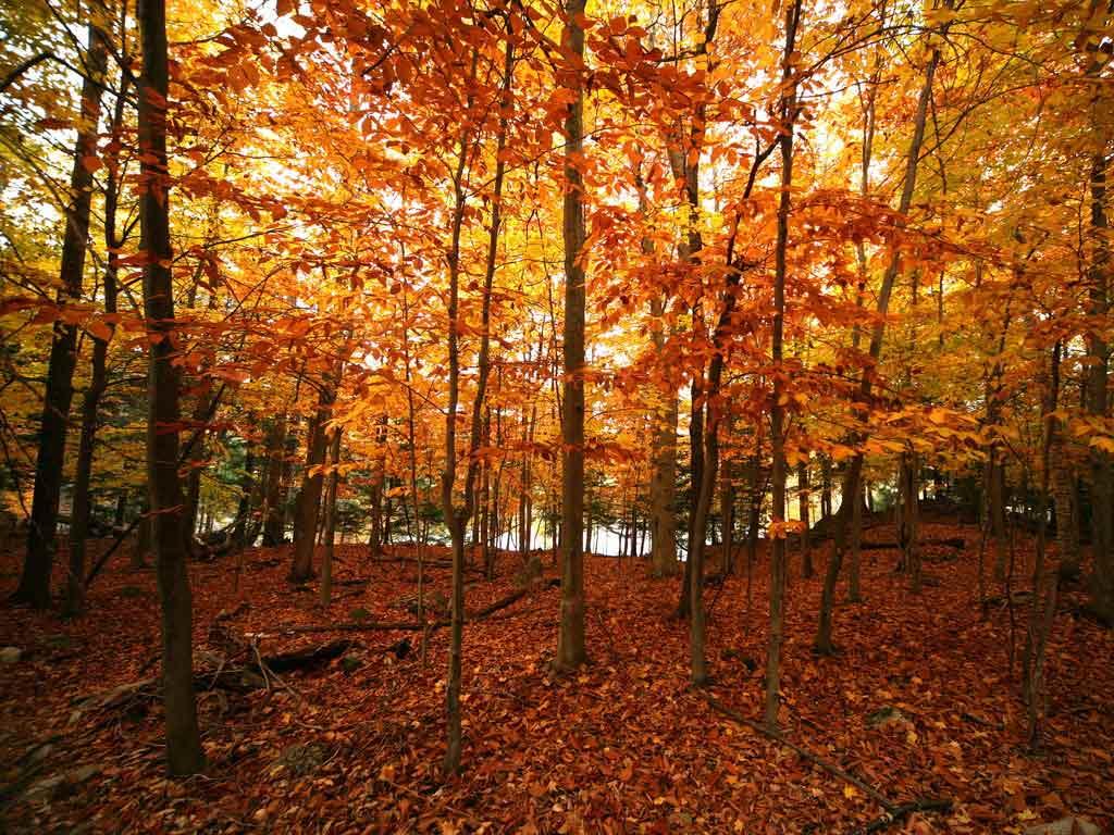 Autumn Wallpapers For Desktop Images Fun 1024x768