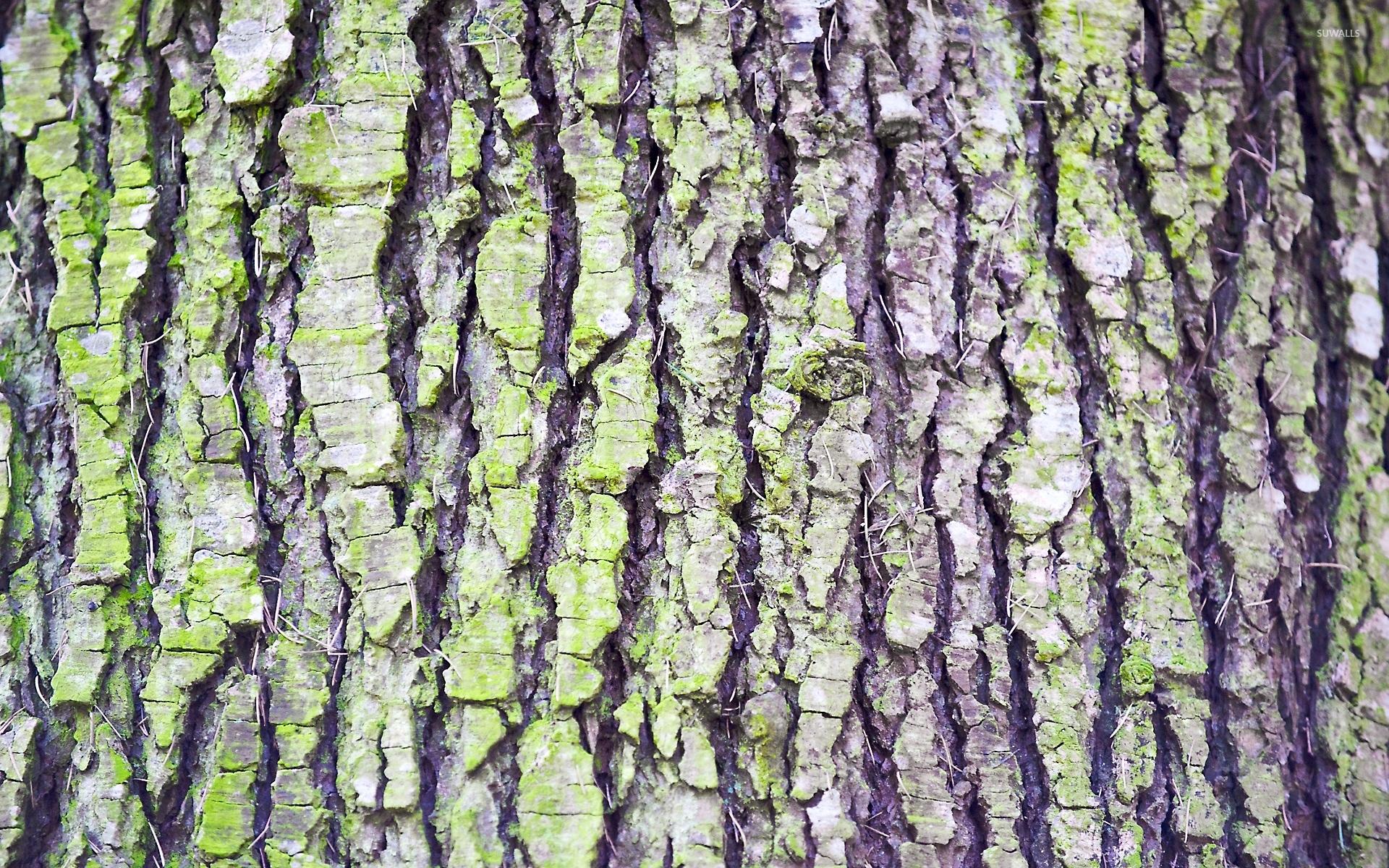 Tree Bark 1920x1200