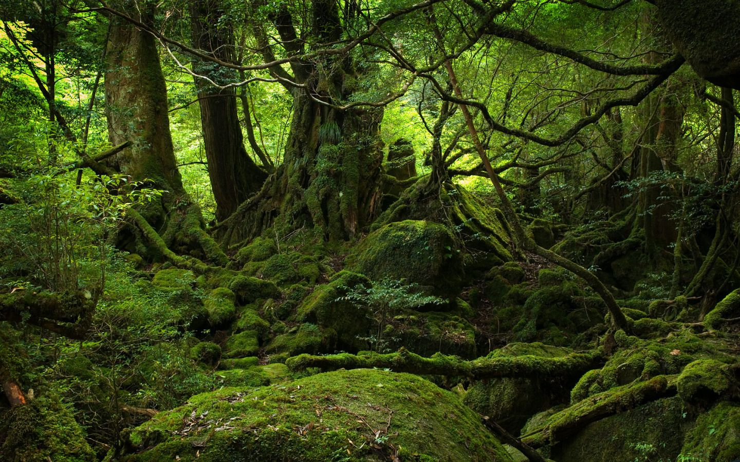 Moss In Forest wallpaper 1440x900