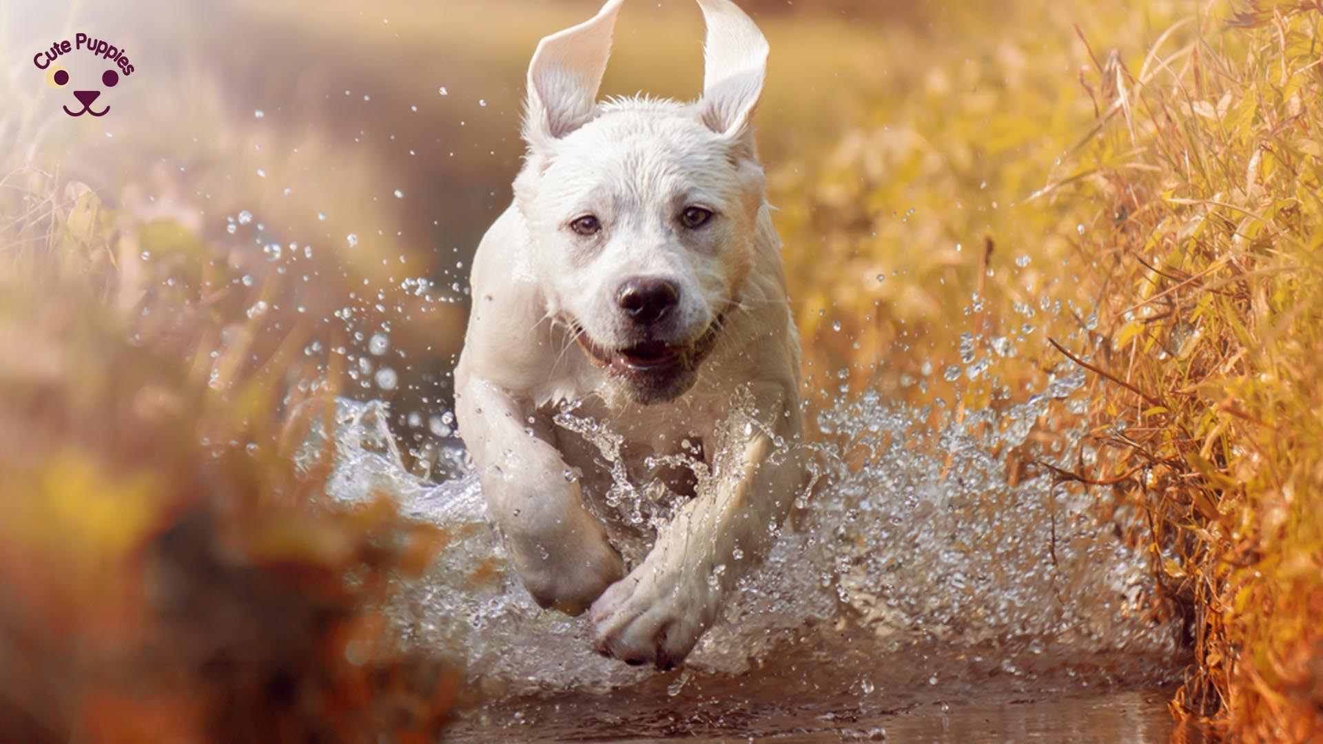 High Quality Dog Wallpaper For Dog Lovers Cute Puppies Now 1920x1080