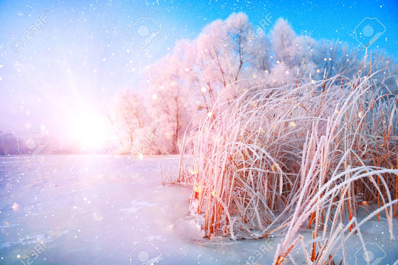 Beautiful Winter Landscape Scene Background With Snow Covered 1300x864