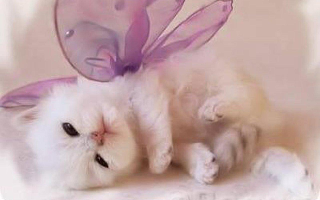 Cute Kitten Wallpaper   Kittens Wallpaper 16094693 1280x800