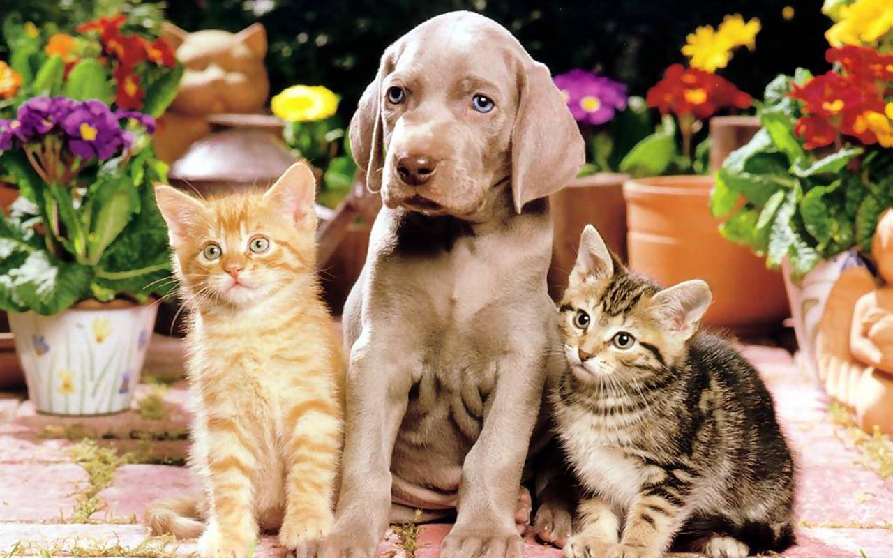 Dog And Cat Wallpapers 1280x800