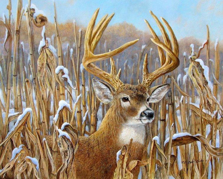 Big Buck wallpaper   ForWallpapercom 757x606