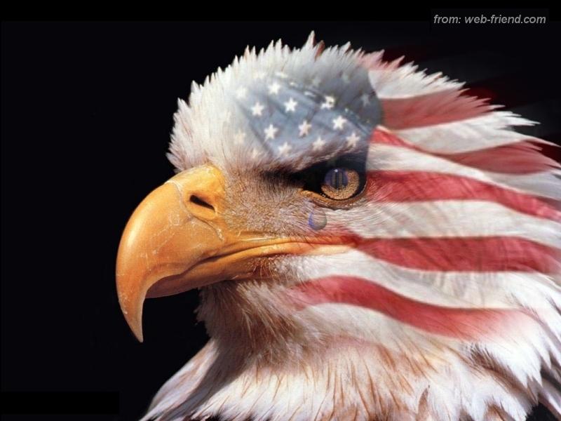 USA Flag Wallpaper usa eagle 800 HD Wallpapers 3D 800x600