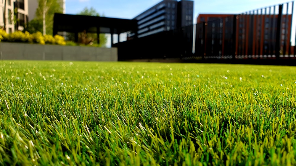 900 Grass Background Images Download HD Backgrounds on Unsplash 1000x563