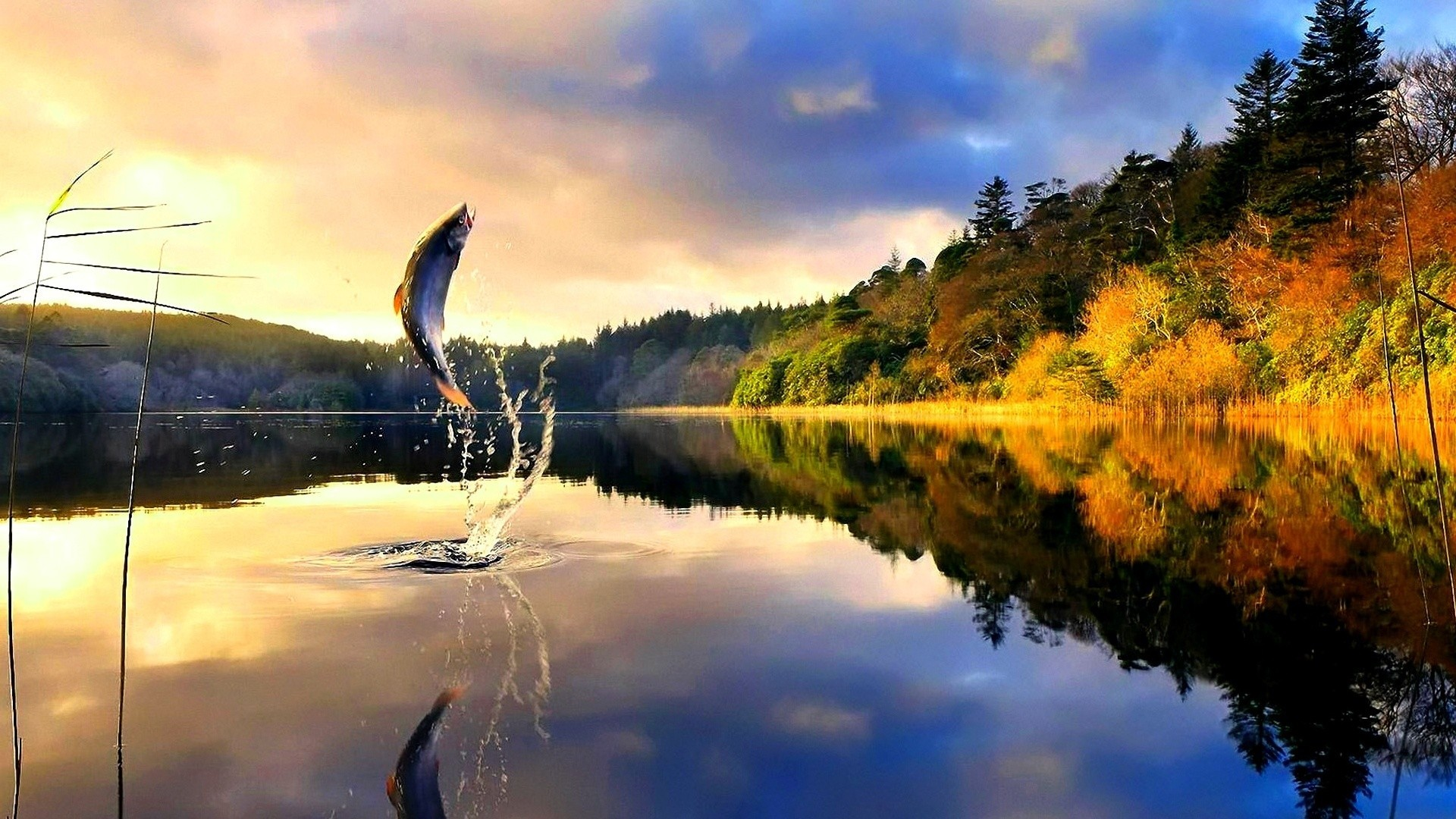 HD Fly Fishing Wallpaper 68 images 1920x1080