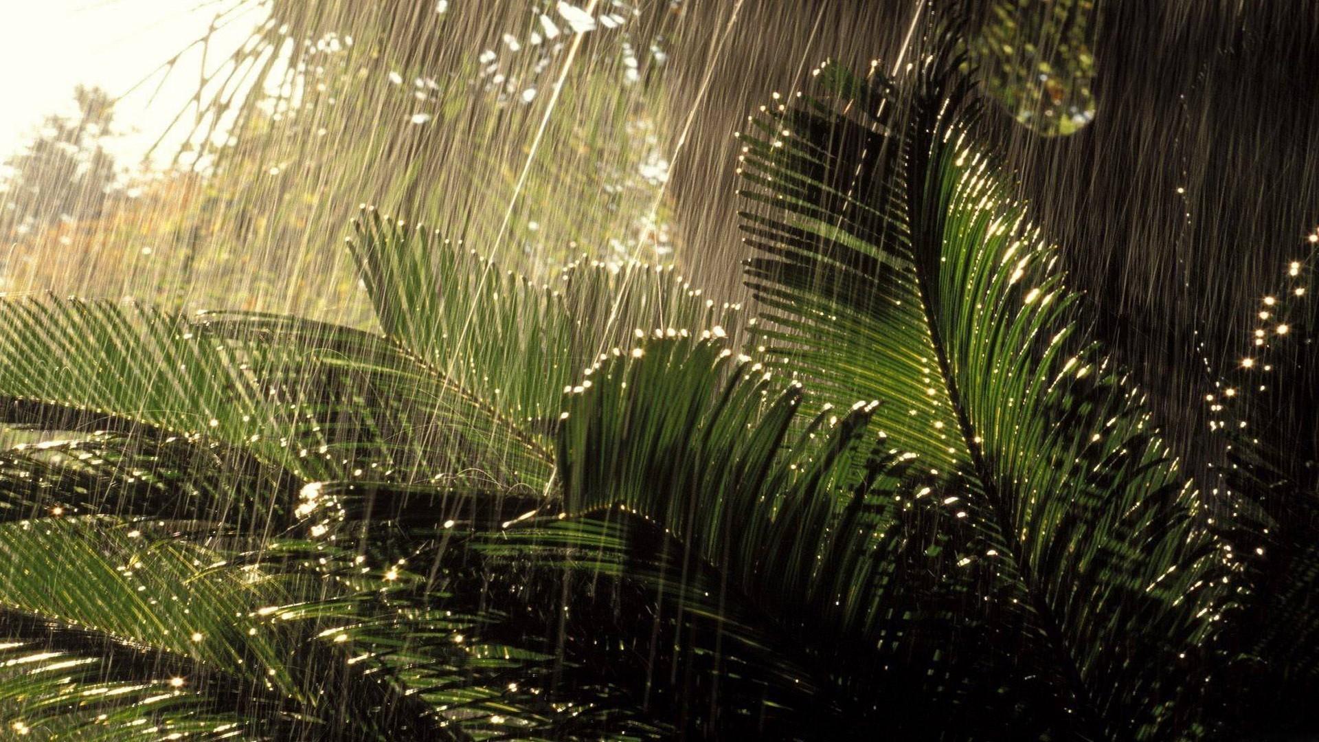 Monsoon Wallpaper Wallpapersafari